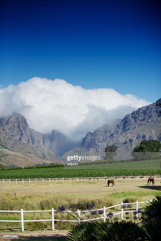 Cape Winelands Pasture Horse Mountain Scene : Stock Photo