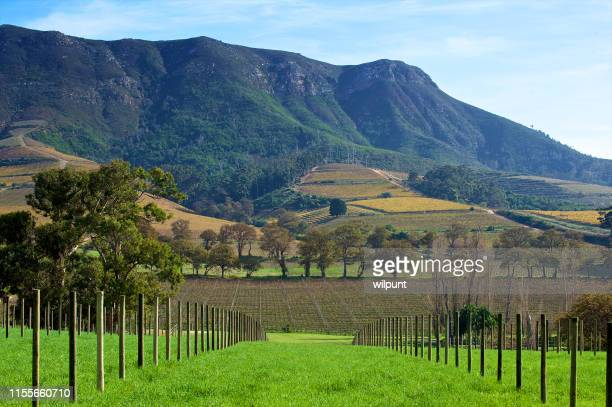 cape winelands serenity winter scene - constantia stock pictures, royalty-free photos & images