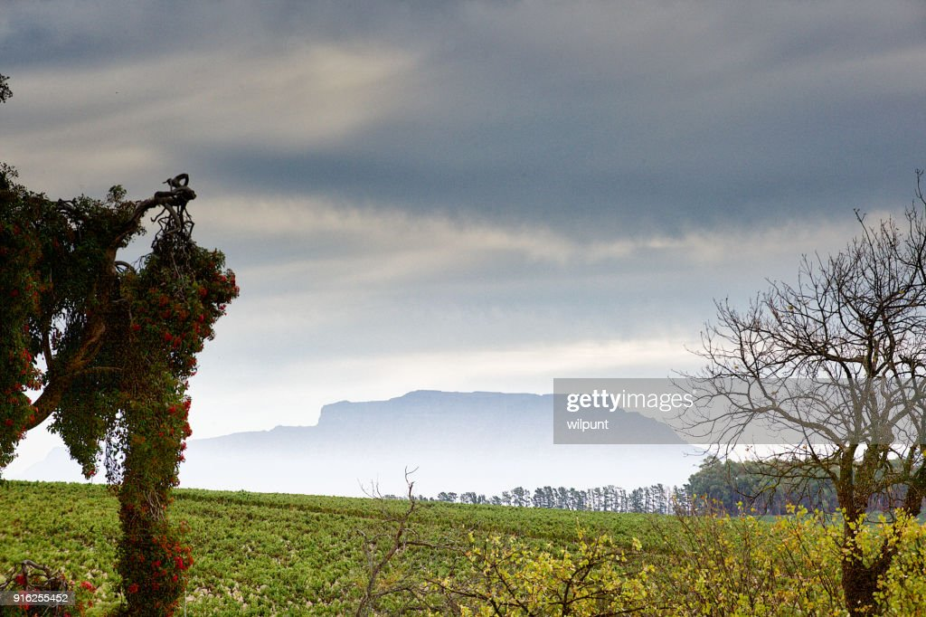 Cape Winelands with Table Mountain : Stock Photo