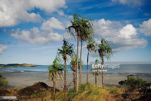 Cape York Peninsula QLD