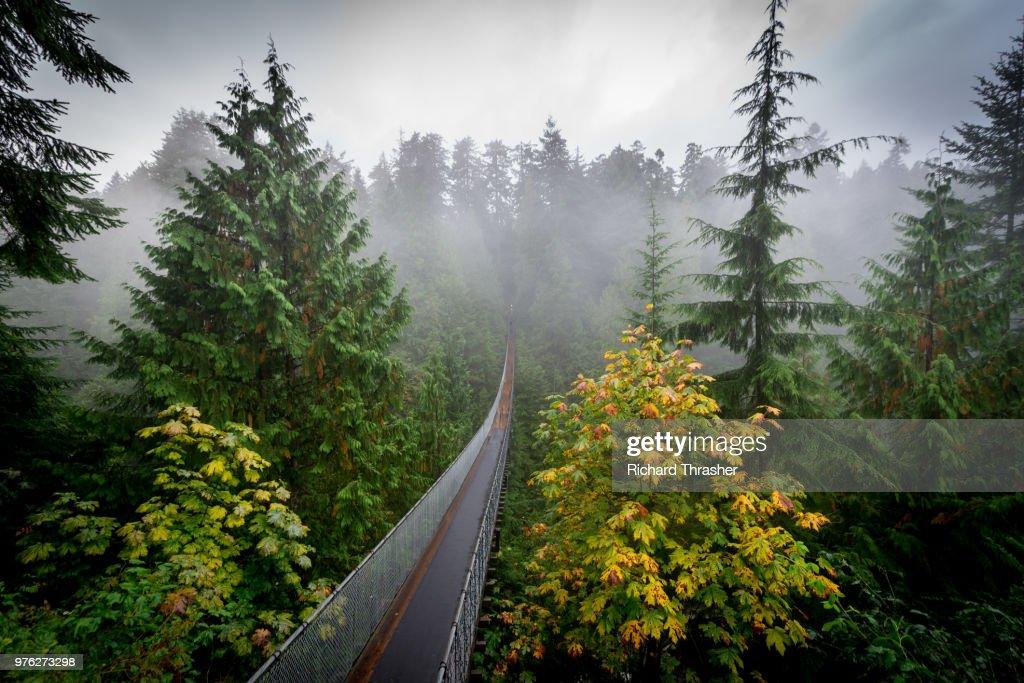 Capilano suspension bridge over rainforest, Vancouver, British Colombia, Canada : Stock Photo