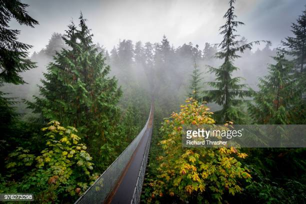 Capilano suspension bridge over rainforest, Vancouver, British Colombia, Canada