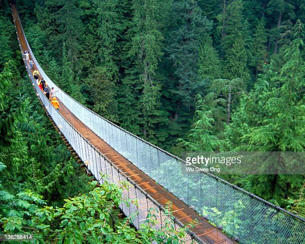 capilano suspension bridge - vancouver canada stock pictures, royalty-free photos & images