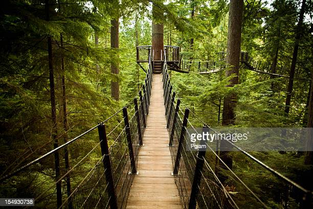 capilano suspension bridge - suspension bridge stock photos and pictures
