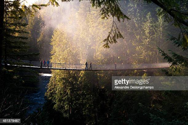 capilano suspension bridge, vancouver - suspension bridge stock photos and pictures