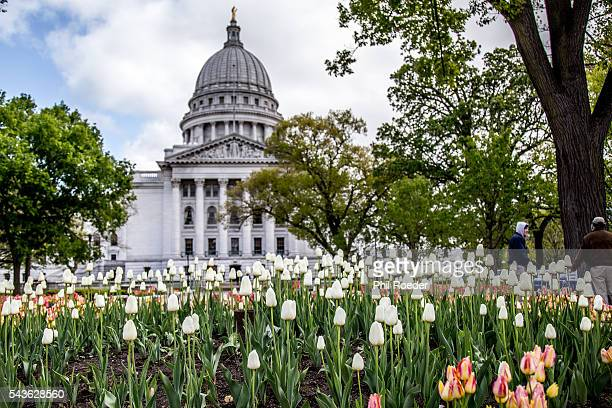 Capitol and Tulips