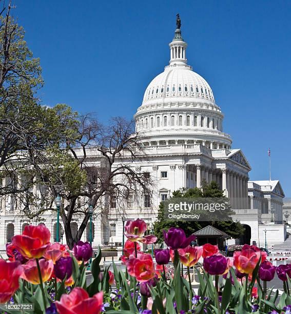 capitol building und roten blumen, washington, dc, entfernt. klaren blauen himmel. - kapitell stock-fotos und bilder
