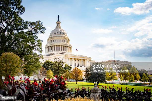 us capitol building beyond the gardens - federal building stock pictures, royalty-free photos & images