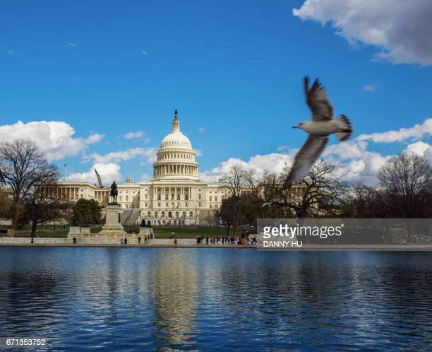 capitol building in washington with flying dove