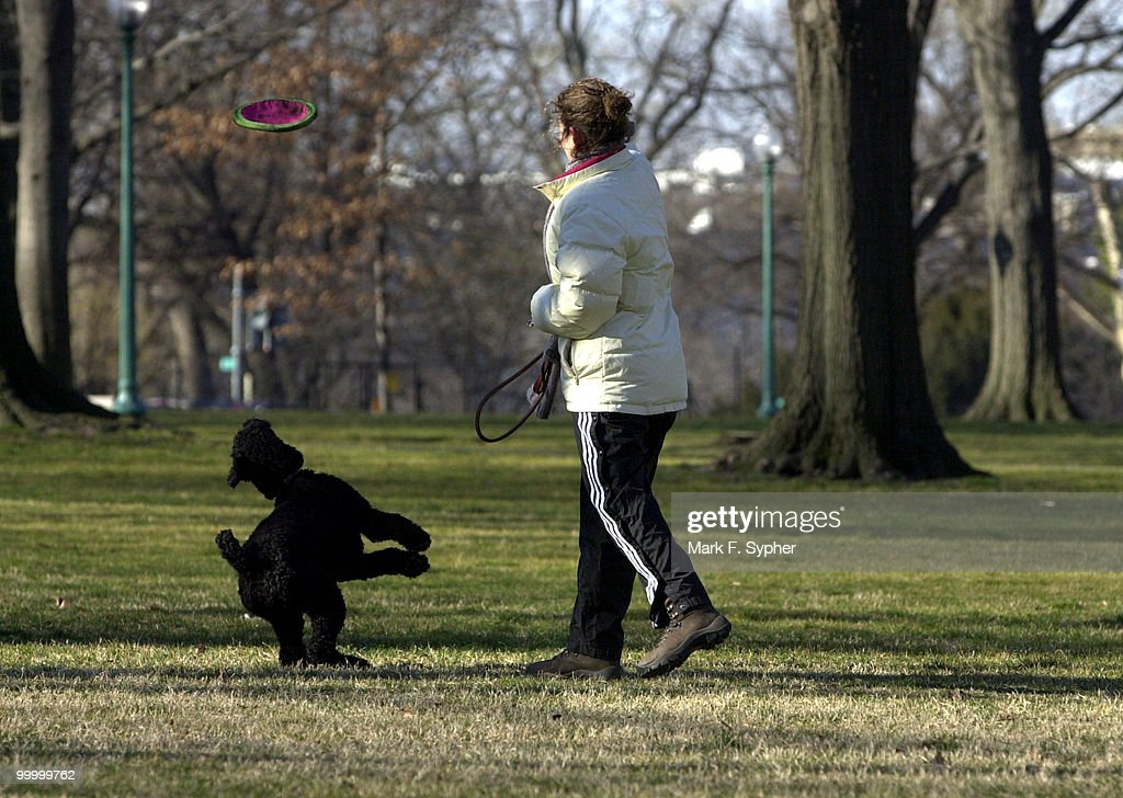 Capitol Hill resident Emily Landau tosses a frisbee to her standard poodle, Jenny, alongside of the Russell Senate Office Building on a chilly Thursday morning.