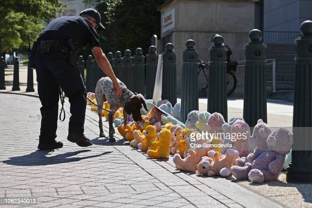 S Capitol Police K9 dog inspects ParentsTogether's 'teddy bear sit in' in front of the Rayburn House Office Building July 29 2020 in Washington DC...
