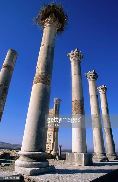 capitole roman ruins. - volubilis fotografías e imágenes de stock