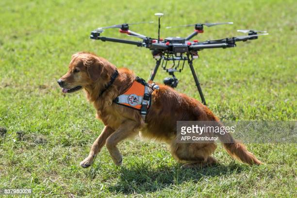 Capo a dog of Swiss disaster dog association Redog sits next to a drone during a press presentation on combined search and rescue with drones and...