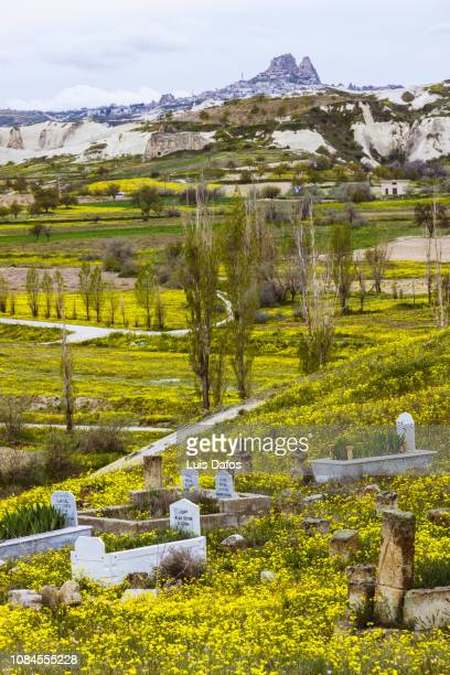 cappadocia, old graveyard on flowery field - dafos stock photos and pictures
