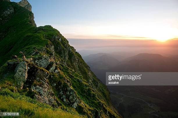 capricorn and sundown - steep stock photos and pictures