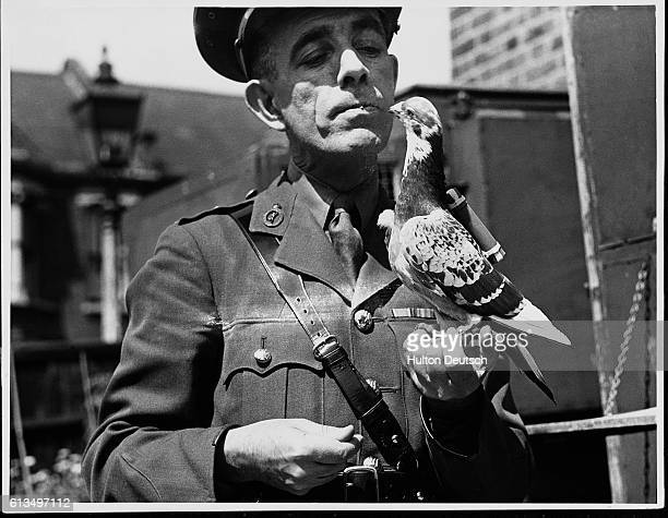 Captain Caiger holding a carrier pigeon used by the army ca 1941