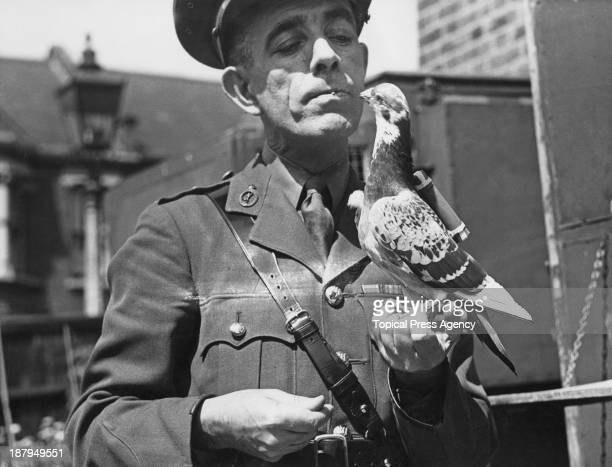 Captain Caiger of the British Army Pigeon Service, holding a carrier pigeon equipped with a 'back carrier' message capsule, 23rd July 1945.
