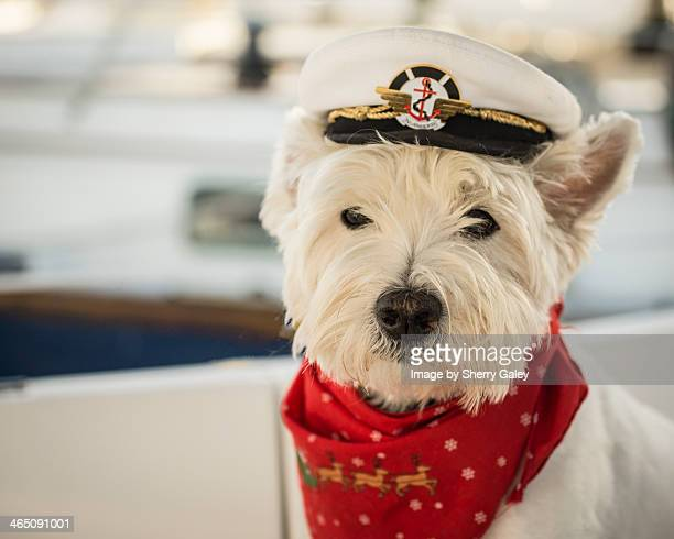 Captain Charles, the westie