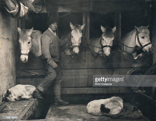 Captain Oates on the 'Terra Nova' with the Siberian Ponies' circa 1911 British Antarctic explorer Lawrence 'Titus' Oates with expedition ponies and...