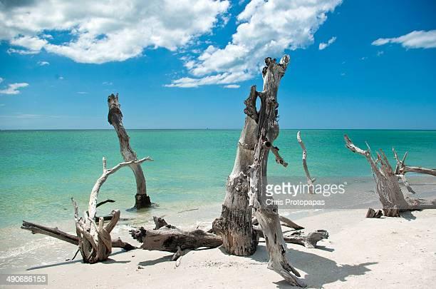 captiva island - captiva island - fotografias e filmes do acervo