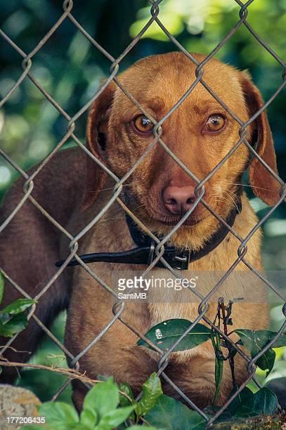 Captive look