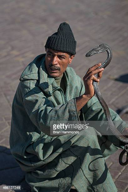CONTENT] Capture of a snake charmer in the medina in Marrakech Morocco