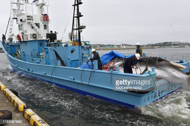A captured Minke whale is carried by a whaling ship at a port in Kushiro Hokkaido Prefecture on July 1 2019 Japan began its first commercial whale...