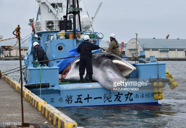 A captured minke whale is unloaded from a whaling ship at a port in Kushiro Hokkaido Prefecture on July 1 2019 Japanese whalers brought ashore their...