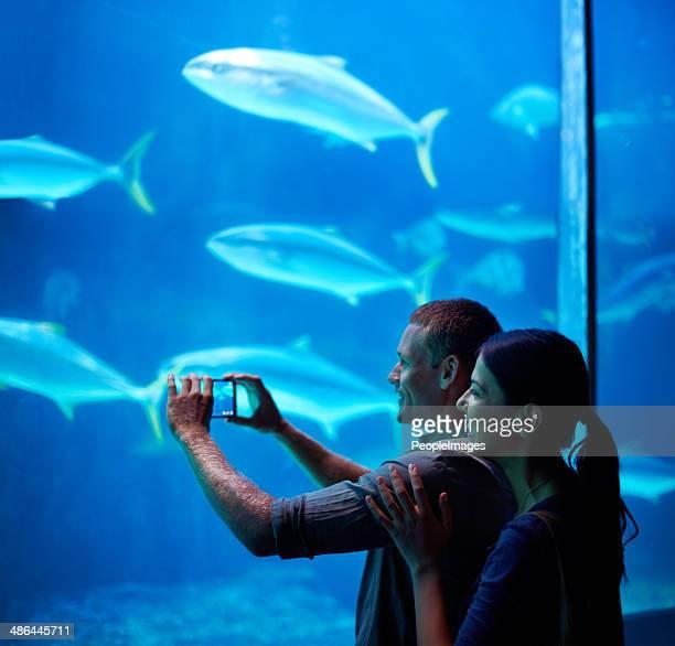 Capturing marine memories
