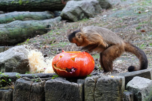 FRA: The Lille Zoo Celebrates Halloween