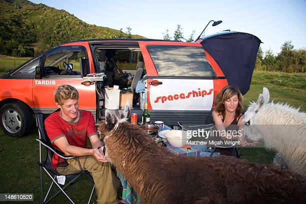 Car campers feeding llamas.