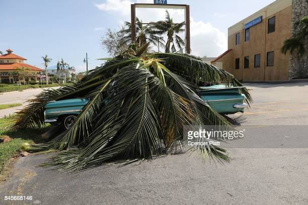 A car covered by a downed tree is shown the morning after Hurricane Irma swept through the area on September 11 2017 in Marco Island Florida...