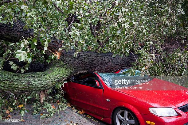 car crushed by a tree - crushed leaves stock pictures, royalty-free photos & images