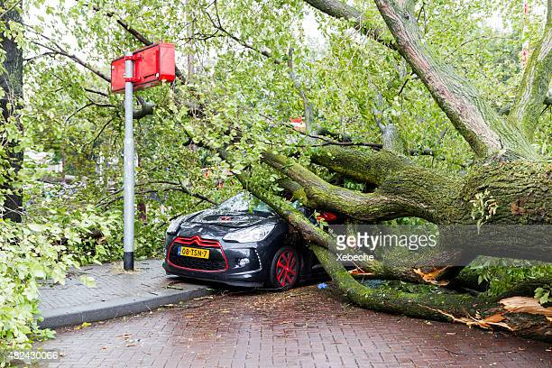 Car destroyed by fallen tree