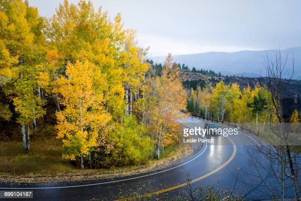 A car drives a curvy mountain road in the rain, aspen trees in golden fall colors