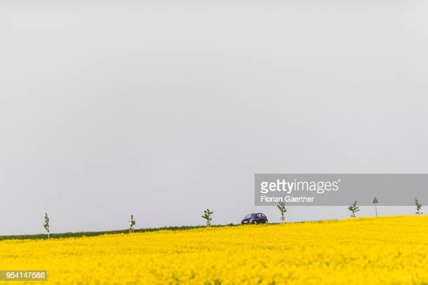 Car drives along a street between fields of rape on April 29, 2018 in Kunnersdorf, Germany.