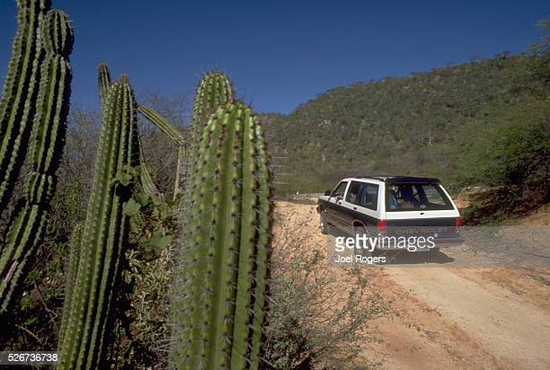 A car drives on the dirt roads lined with cacti in the desert in La Paz Baja California Sur Mexico
