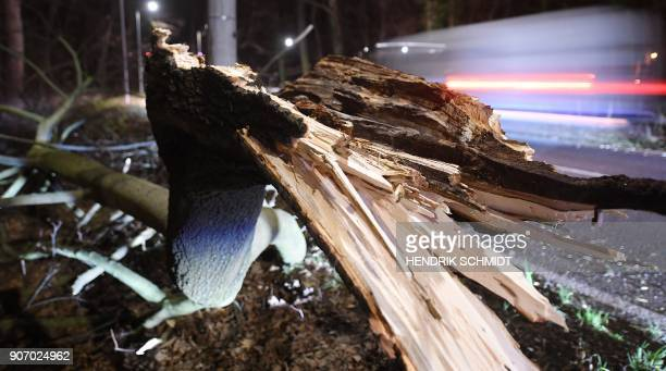 A car drives past a fallen tree beside a road near Leipzig eastern Germany on January 19 after the region was hit by the heavy storm named...