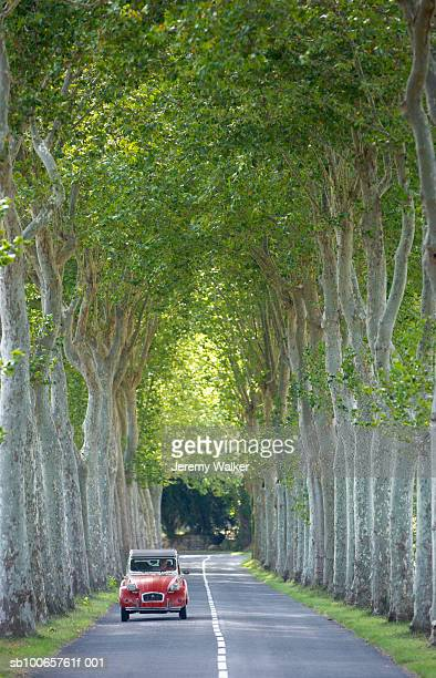 Car driving along tree lined avenue, France