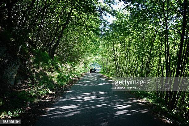 Car driving down a rural forested road