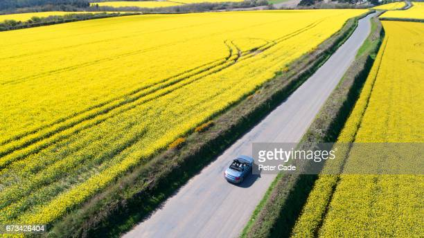 car driving on country road between fields - rushing the field stock pictures, royalty-free photos & images
