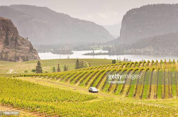 car driving through rolling vinyards - kelowna stock pictures, royalty-free photos & images