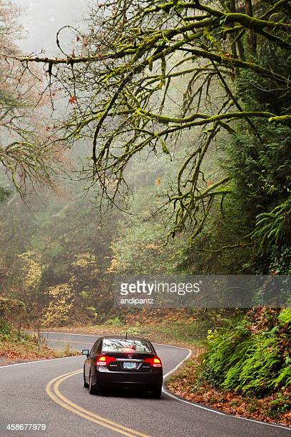 car in oregon forest - honda civic stock pictures, royalty-free photos & images