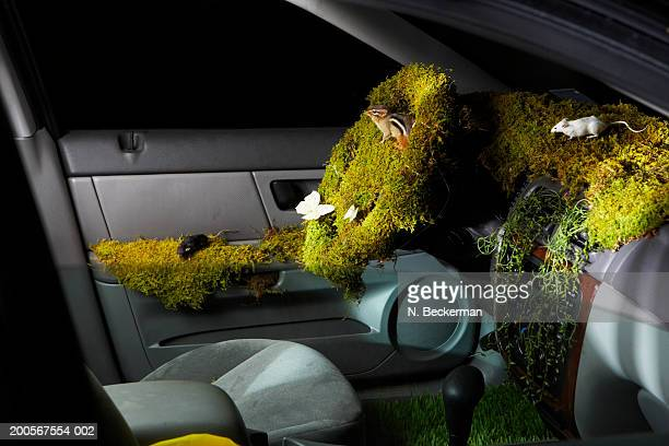 car interior covered with moss, grass, butterflies, and field mice - field mouse stock photos and pictures
