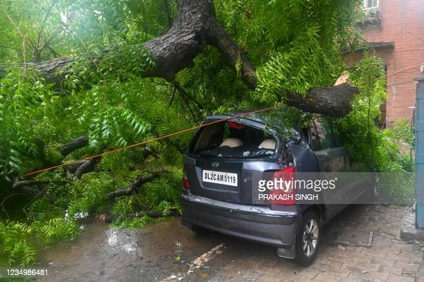 Car is damaged by a tree that was uprooted after heavy rains in New Delhi on September 1, 2021.