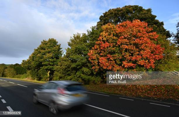 Car is driven past the autumnal colours of the leaves of a tree in Mold, north Wales, on October 7, 2020.