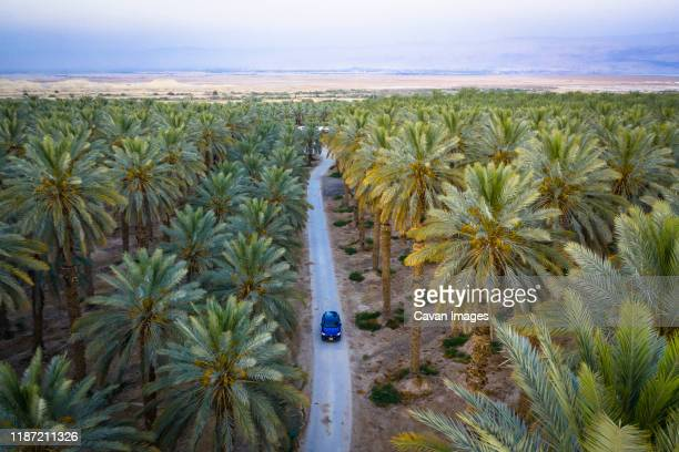 car is on the road between green palm trees - palestinian territories stock pictures, royalty-free photos & images