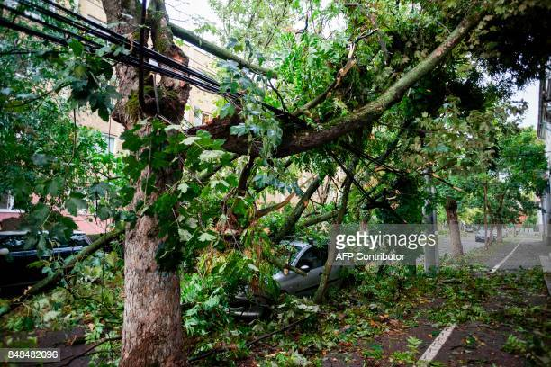 A car is pictured under tree branches after a severe storm and wind gusts in Timisoara city September 17 2017 / AFP PHOTO / CORNEL PUTAN