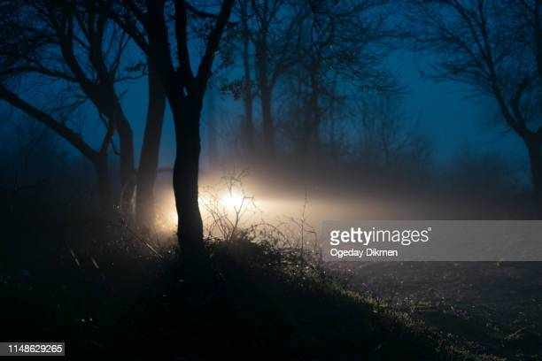 car lights in fog - headlight stock pictures, royalty-free photos & images