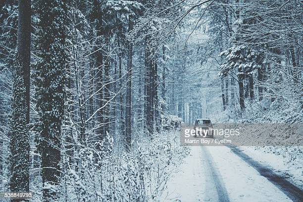 Car On Road Along Trees During Winter